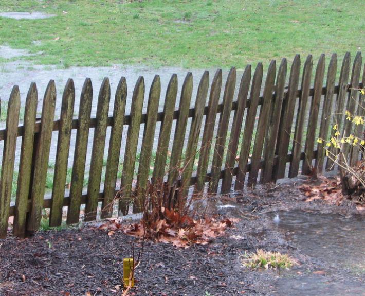 Wet Yard